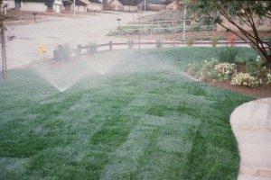 Sod Installation Water Lawn