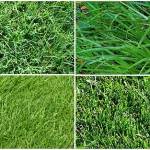 Learn about types of sod from Orange County Sod Farm