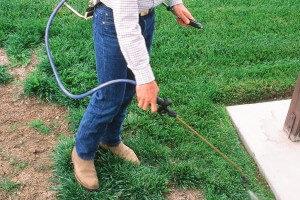 Kill the old lawn to prepare for sod
