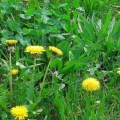 Best Way to Prevent Unwanted Weeds